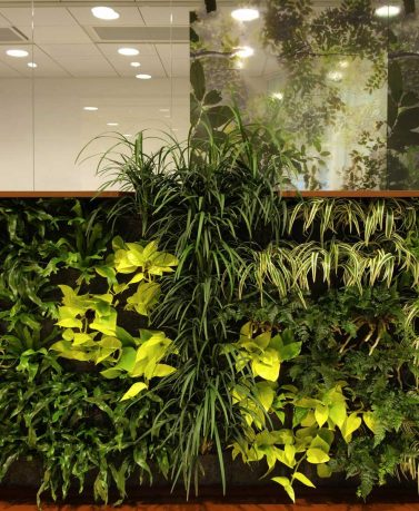Plants Wall Office Decoration Ideas