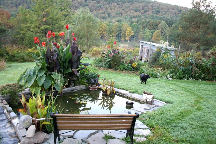 Home garden design plants